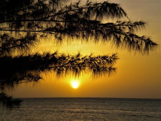 Jamaica2011 076 (2)